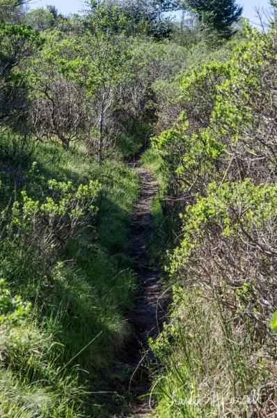 Hillside trail near 8b