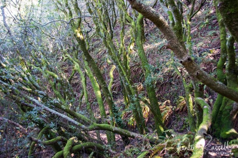 Interesting trees on path near 9i