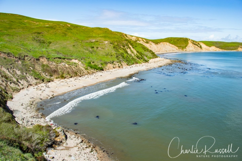 Elephant seal beach at Chimney Rock in Pt Reyes