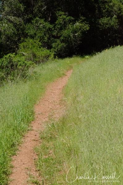 Gravesite trail