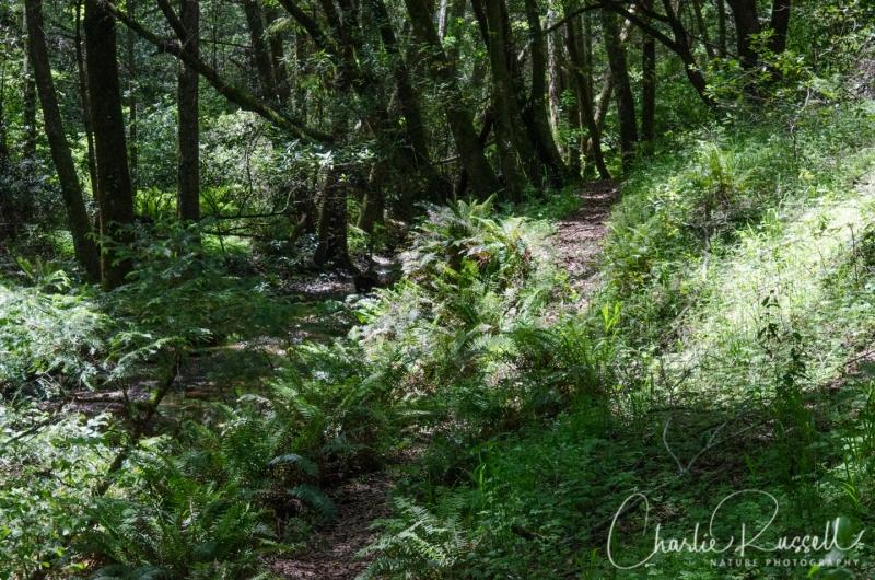 Trail alongside stream in Devil's Gulch