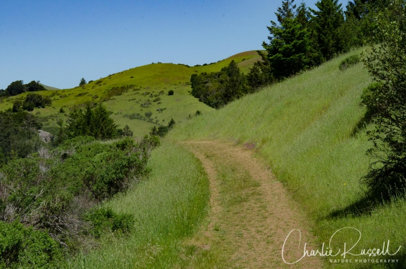 Madrone fire road