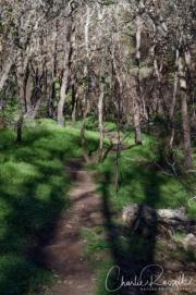 Headingup the Milkmaids trail