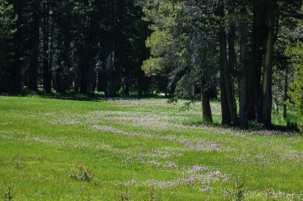 Meadow at White Wolf