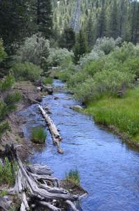 Sagehen Creek