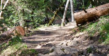 Cataract Trail Mt Tamalpais
