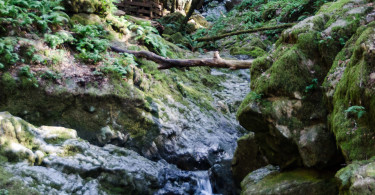 Cataract trail, Mt Tamalpais