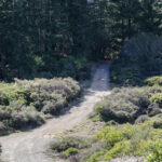 Laurel Dell Fire Road, Mt Tamalpais