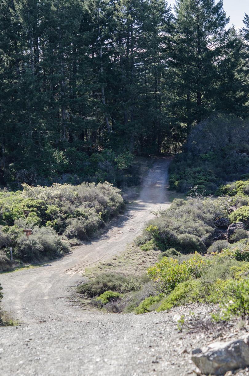 Laurel Dell Fire Road, Mt Tamalpais