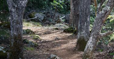 Benstein trail, Mt Tamalpais