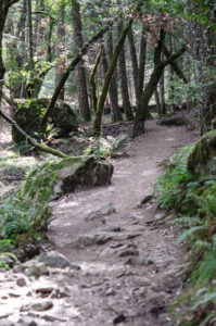 Cataract trail, Mt Tamalpais