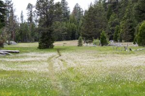 Jake Schneider Meadow with Bistort on the Caples Creek trail