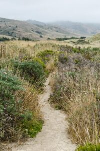 Trail through the scrub behind the sand dunes