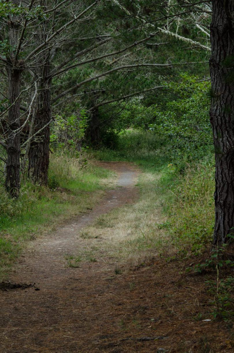 Muddy Hollow trail