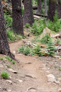 Mill Creek Falls trail, It starts off through mixed conifer