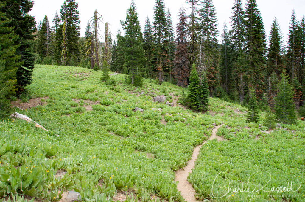 Mill Creek Falls trail, Masses of Balsamroot and Mules Ears