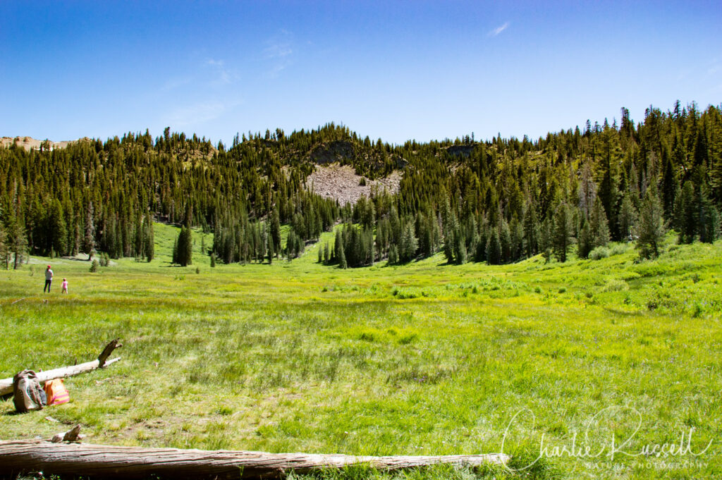 Paradise meadow opens up suddenly, as you emerge from the trees. The stream meanders through this meadow