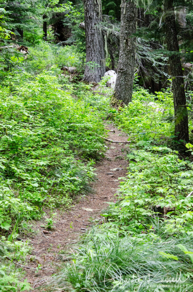Blair Lake Meadow, trail past the meadow into the forest