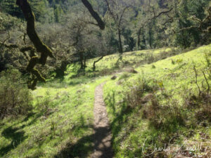Hidden Meadow Trail as you look back downhill