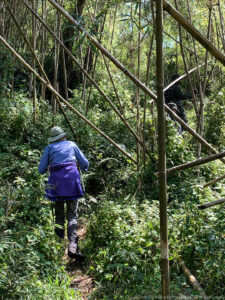 Clambering up the trail through the bamboo and undergrowth