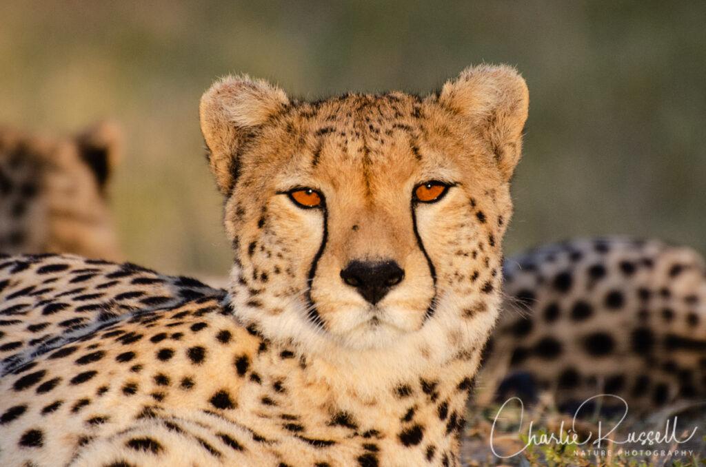 Africa-20190814-286-1024x678.jpg