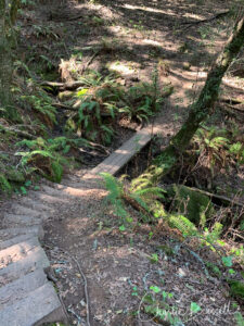 Marker 16 to 14, West trail, has steps and bridges