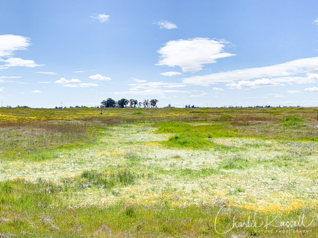 Mather vernal pools (March 2020)