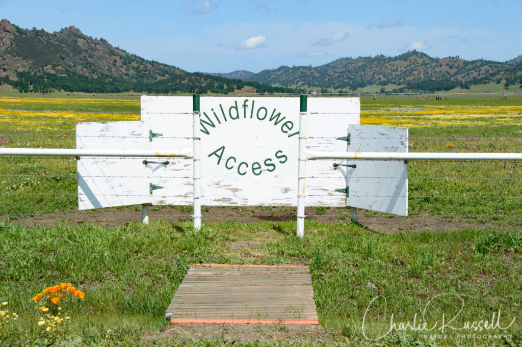 Entrance to the wildflower access pasture